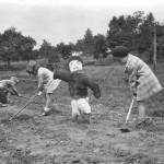 Tending Unquowa's early school gardens in the 1930s