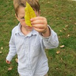 leaf looker