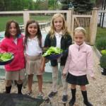 picking lettuce 009