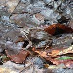 Audubon spring 3